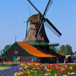 Windmill in holland — Stock Photo #5691267