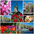 Holland collage — Stock Photo #5869264