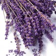Stock Photo: Lavender