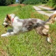 Jumping dog — Stock Photo #5952919