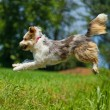Stock Photo: Jumping dog