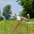 Jumping dog — Stock Photo #5952945