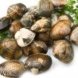 Stock Photo: Live clams