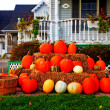 Bunch of pumpkins — Stock Photo