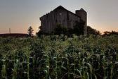 Rural homestead — Stock Photo