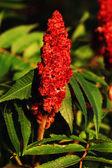 Wild plant — Zdjęcie stockowe