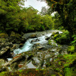 Tropical creek — Stock Photo