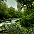 Tropical creek — Stock Photo #5981293