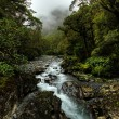 Tropical creek — Stock Photo #5981413