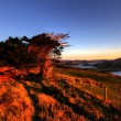 Stock Photo: Otago Peninsula, Dunedin