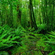 Stock Photo: Rainforest path