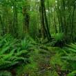Rainforest path — Stock Photo #5989432