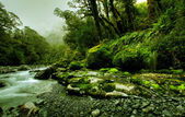 Tropical creek — Stock Photo