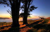 Otago Peninsula, Dunedin — Stock Photo