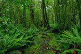 Rainforest väg — Stockfoto