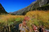 Novozélandský venkov — Stock fotografie