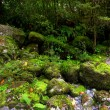 Tropical waterfall — Stock fotografie
