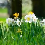 lily prêté — Photo
