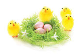Nest with eggs and chicks — Stock Photo
