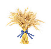 Wheat with bow — Stock Photo