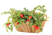 Dogrose in a basket — Stock Photo