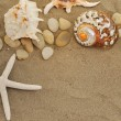 Shells and stones on sand — Stock Photo #5909704