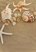 Muszle i kamienie na piasku — Zdjęcie stockowe