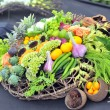 Assortment healthy vegetables in basket — Stok fotoğraf