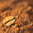 Macro coffee beans and ground coffee — Stock Photo
