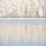 Inverno árvores cobertas com gelo — Foto Stock