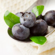 Blueberries on spoon — Stock Photo