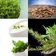 Herbs collage - Stock Photo