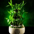 Stock Photo: Bamboo plant