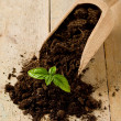 Gardening birth of basil plant - Stock Photo