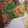 Zion Forest Path — Stock Photo