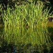 Grass in Water — Stock Photo