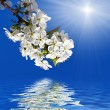 Stockfoto: Spring flowers tree in sun light