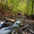 Forest mountain river - Stock Photo