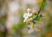 цветущие цветы весны — Стоковое фото
