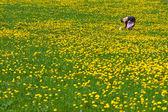 Woman on dandelions field — Stock Photo