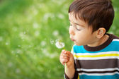 Kid blowing dandelion — Stock Photo