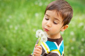 Kid blowing dandelions — Stock Photo