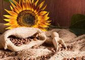 Kawa i słonecznika — Zdjęcie stockowe