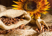 Coffee beans and sunflower — Zdjęcie stockowe