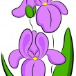 Iris Flower — Vector de stock