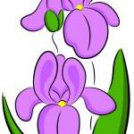 květina Kosatec — Stockvektor