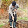 Old farmer digging in the garden — Stock Photo #5473288