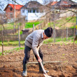 Stock Photo: Old farmer digging in garden