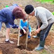 Grandfather, daughter and grandson planting trees — Foto Stock
