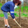 Redhead young lady digging in the garden — Stock Photo #5473339